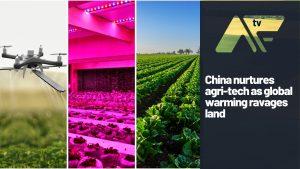 China nurtures agri-tech as global warming ravages land