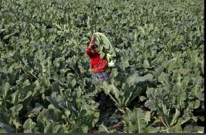 US Tech Giants Roped in to Help Digitise Indian Farming